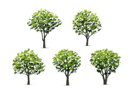 Collection of realistic tree isolated on white background. Natural object for landscape design, park and outdoor graphic. Vector illustration. Vectores