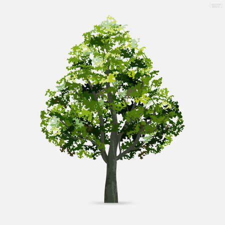 Tree isolated on white background. Use for landscape design, architectural decorative. Park and outdoor object idea. Vector illustration.