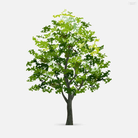 Tree isolated on white background. Use for landscape design, architectural decorative. Park and outdoor object idea. Vector illustration. Vektorgrafik