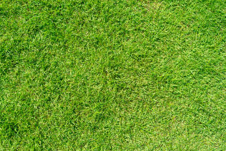 Green grass pattern and texture for background.