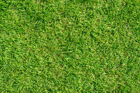 Green grass texture. Green lawn yard texture background. Close-up. Stockfoto