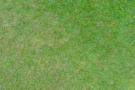 Green grass pattern and texture for background. Close-up image. Stockfoto