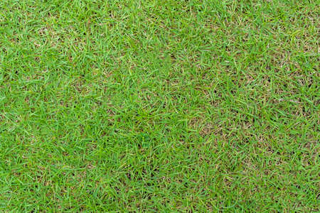 Green grass pattern and texture for background. Close-up image. 版權商用圖片