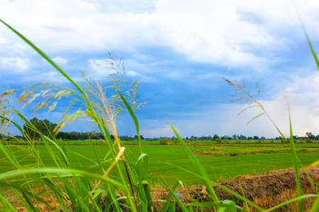 naturally: The nature  of the agricultural