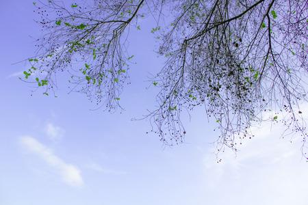 sky: sky Stock Photo