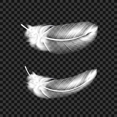 White Swan Feathers On Transparent Background. EPS10 Vector