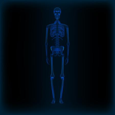 Realistic Human Skeleton X-ray Anatomy Medical Image. EPS10 Vector