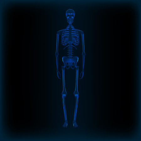 Realistic Human Skeleton X-ray Anatomy Medical Image. EPS10 Vector Illustration