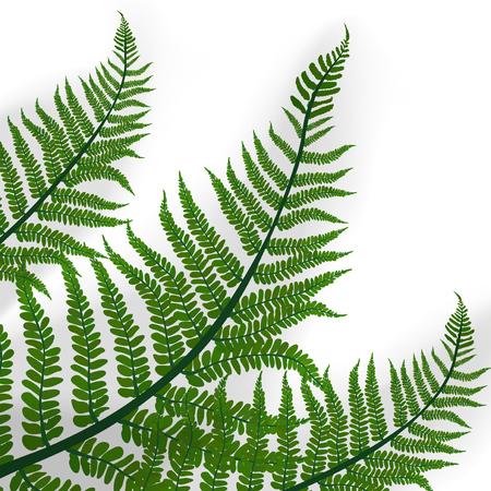 Green Leaves Of Tropical Fern Plant. EPS10 Vector Vetores