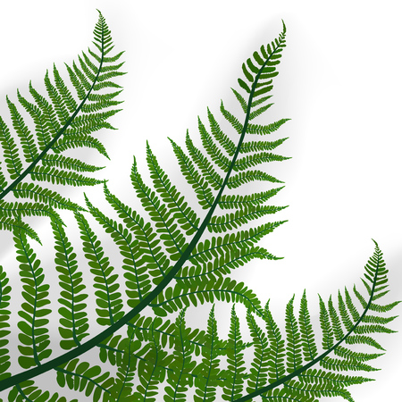 Hojas Verdes De La Planta De Helecho Tropical. Vector EPS10 Ilustración de vector
