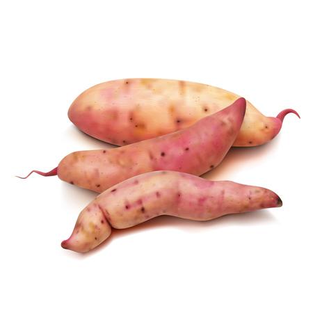 Realistic Sweet Potato Set On A White Background. EPS10 Vector Illustration