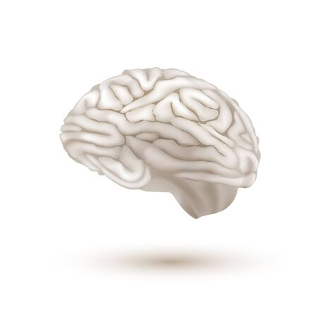 3D White Flying Human Brain With Shadow
