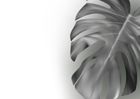 Black And White Monstera Leaf Abstract Background Archivio Fotografico - 149122196