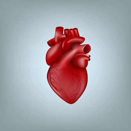 Realistic 3D Human Heart With Venous System Vector Illustration