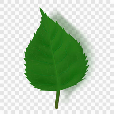 Realistic Green Leaf With Shadow On Transparent Иллюстрация