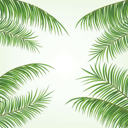 2D Realistic Palm Leaves On White Background
