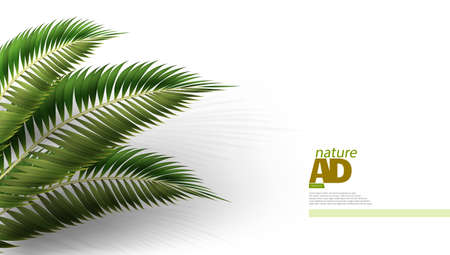 2D Realistic Palm Leaf On White Background