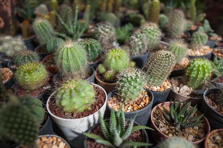 types of cactus: Cactus plants in garden