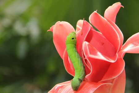 green worm on red flower.