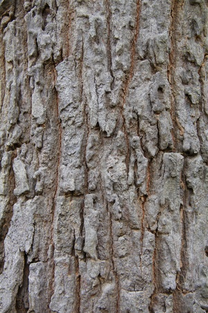 the style and color of natural bark wood. Stock Photo - 11283158