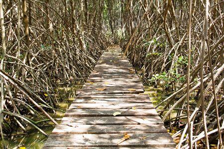 wooden bridge  using walk go to mangrove forest Stock Photo - 13600147