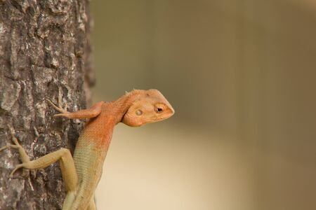 portrait of a bearded dragon on the tree  photo