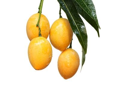 Bouea or GarsIuria or Marian Plum or Maprang  : tropical fruit in Thailand Stock Photo