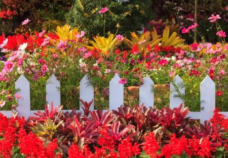 ルーイ県、タイのカラフルな花の周り白い木柵 写真素材