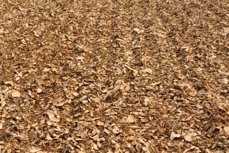 objected: Dried cassava roots dried in the factory yard  Stock Photo