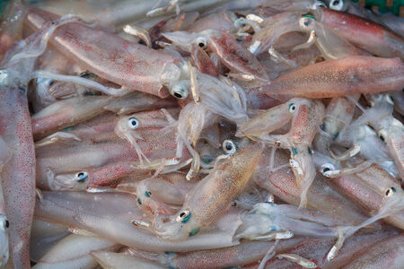 a lot of cuttlefish and squid ready for sale photo