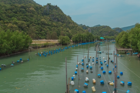 brackish water: farming shellfish in brackish water in Thailand