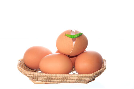 chicken eggs and green worm in wicker basket isolated on white background photo