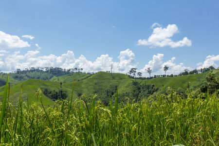 Fresh rice field over the mountain range and blue sky in Thailand.