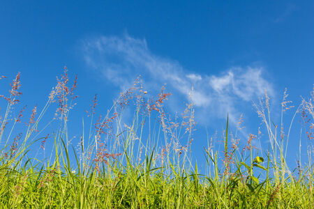 Green grass  with  blue sky background in Thailand.