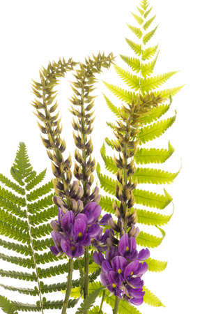 purple flower and green leaf  on a summer day with white  background Stock Photo