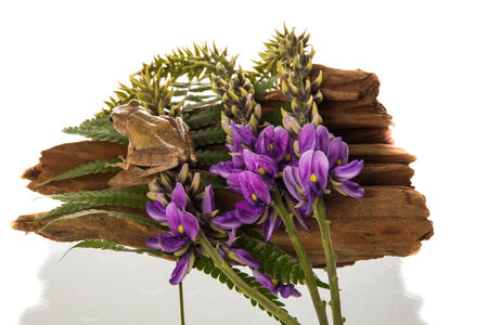 purple flower and frog on wood with white  background Stock Photo