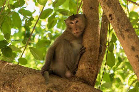 grimace: Portrait of the monkey with an amusing grimace