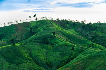 Green agriculture fields on mountain in Loei Province,Thailand Stock Photo