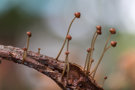 Mushrooms in forest in the rainy season in the Loei Province,Thailand