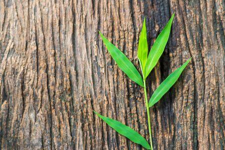 blades: green grass blades on old wood background