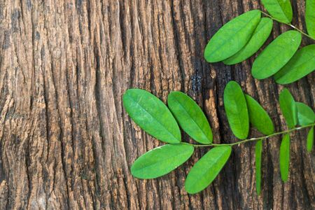 hojas antiguas: the green leaves on old wood background Foto de archivo