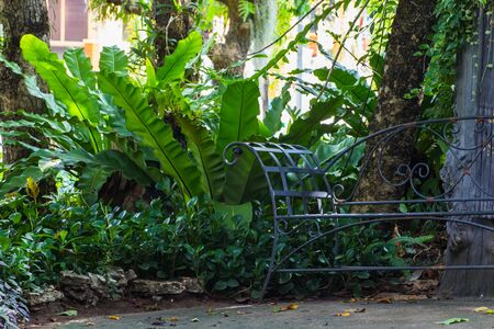 perennials: Steel bench with shade garden with perennials in park Stock Photo
