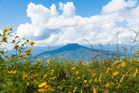 forground: Beautiful Thailand landscape with hills and low clouds with flower forground