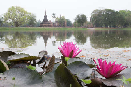 blossoming pink lotus  on archaeological site background,fucus on lotus Stock Photo