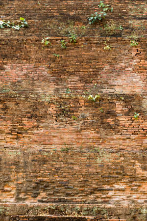 Red and yellow brick wall background with green grass