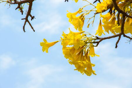 blossoming yellow flower on blue sky background