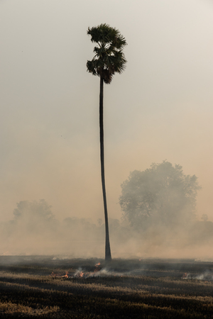 occur: Smoke and flames occur from agriculturist Stubble burning rice straw for farming new rice