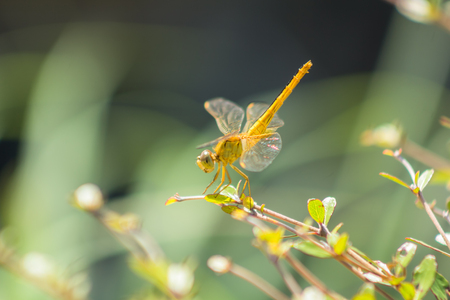 Beautiful nature scene of dragonfly, it live in the nature habitat.
