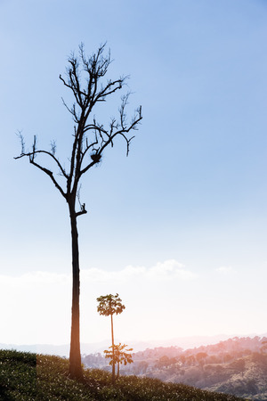 deforested: A single tree left in a deforested landscape on a hill Stock Photo
