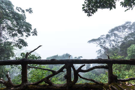 Morning view with fog in Phu Luang Wildlife Sanctuary in Loei,Thailand